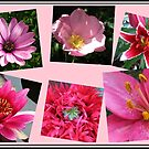 Pink Flowers of Summer Collage von BlueMoonRose