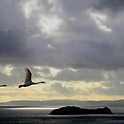 Flight into the Light. by Kenart