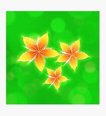 Summer plant Photographic Print