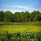 Sheldon Marsh - Summer Meadow by Shawna Rowe