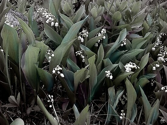 Lilies of the Valley Mindscape No 1 by Wayne King