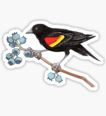Red-Winged Blackbird and Blueberries Pen and Ink Illustration Sticker