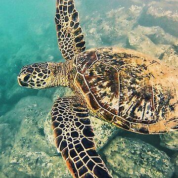 Hawaiian Turtle by mattjwett773
