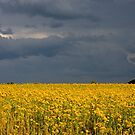 Storm Brewing over Indiana Field by Kent Nickell