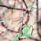 Herbst Zweige von Kendra Kantor