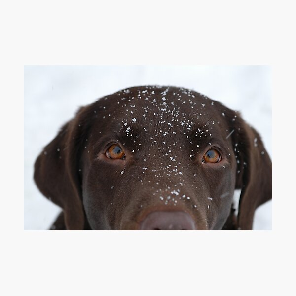 Snow Dog Photographic Print