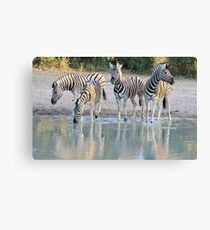 Zebra Reflection - Beautiful African Wildlife Canvas Print