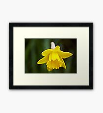 The first bulb of Spring Framed Print