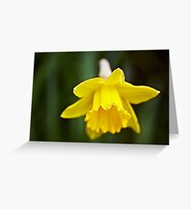 The first bulb of Spring Greeting Card