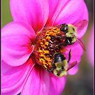 wee two.. by FotoBloke