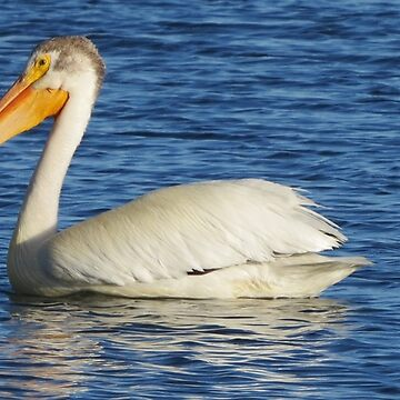 Pelican on the Water by Bennebula