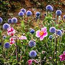 Anemones & Echinops by vivsworld
