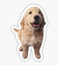 Puppy! Retriever! Sticker