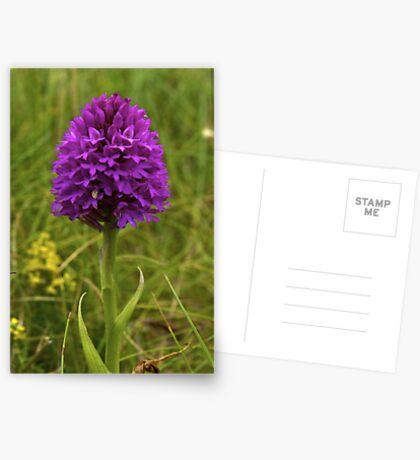 Pyramidal Orchid, Inishmore Greeting Card
