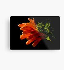 Flame vine flower Metal Print