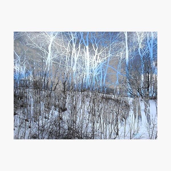 Wintry Trees Photographic Print