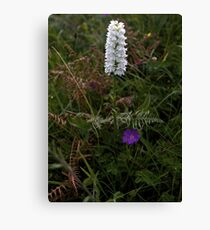 Irish White Orchid, Inishmore Canvas Print