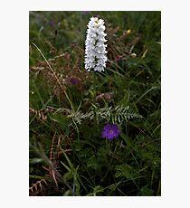 Irish White Orchid, Inishmore Photographic Print