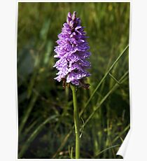 Spotted Orchid, Kilclooney, Donegal Poster