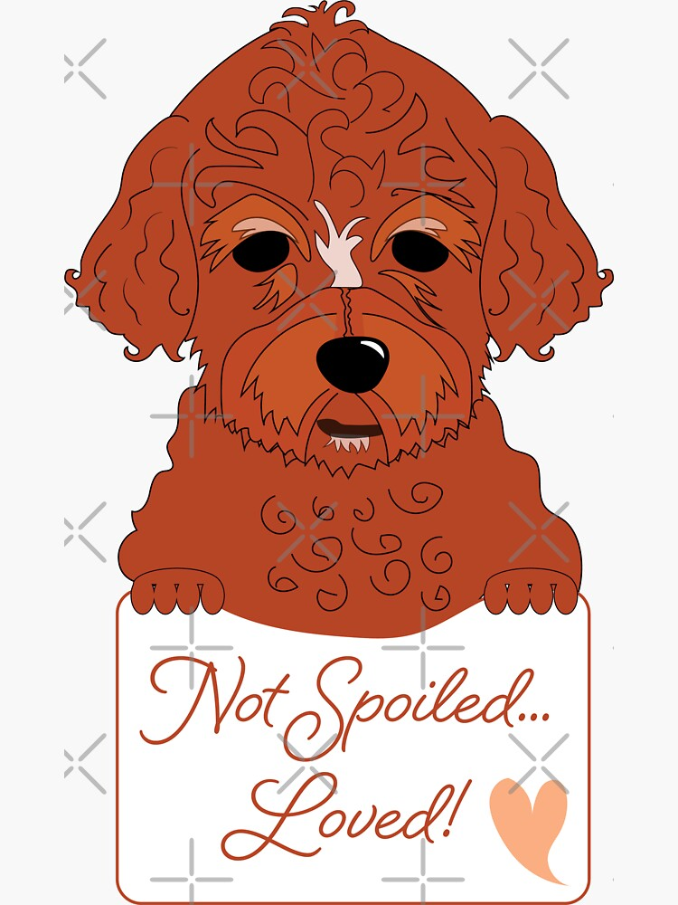 Cavapoo or Cavadoodle Cuteness, puppy dog Not Spoiled, Loved by CreativeContour