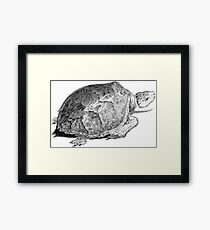 Drudge Reptile  Framed Print