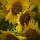 Sunflowers by Amanda Vontobel Photography/Random Fandom Stuff