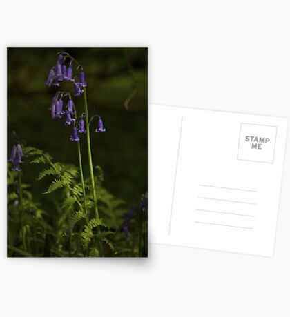 Two Bluebells in Prehen Woods, Derry Greeting Card