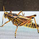 One Impressive Grasshopper by Mikell Herrick