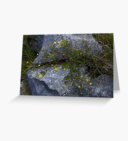 Tormentil, Dun Aengus, Inishmore, Aran Islands Greeting Card