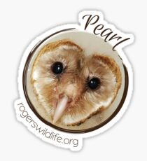 Pearl the Barn Owl Sticker