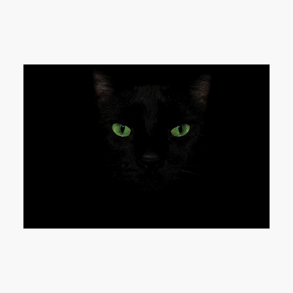 Black Cat Face  Photographic Print