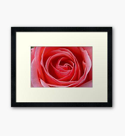 Red, Red...Rose? Framed Print
