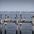 Pelicans on Kemah by klh0853