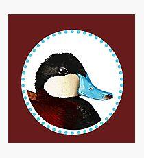 Ruddy Duck Photographic Print