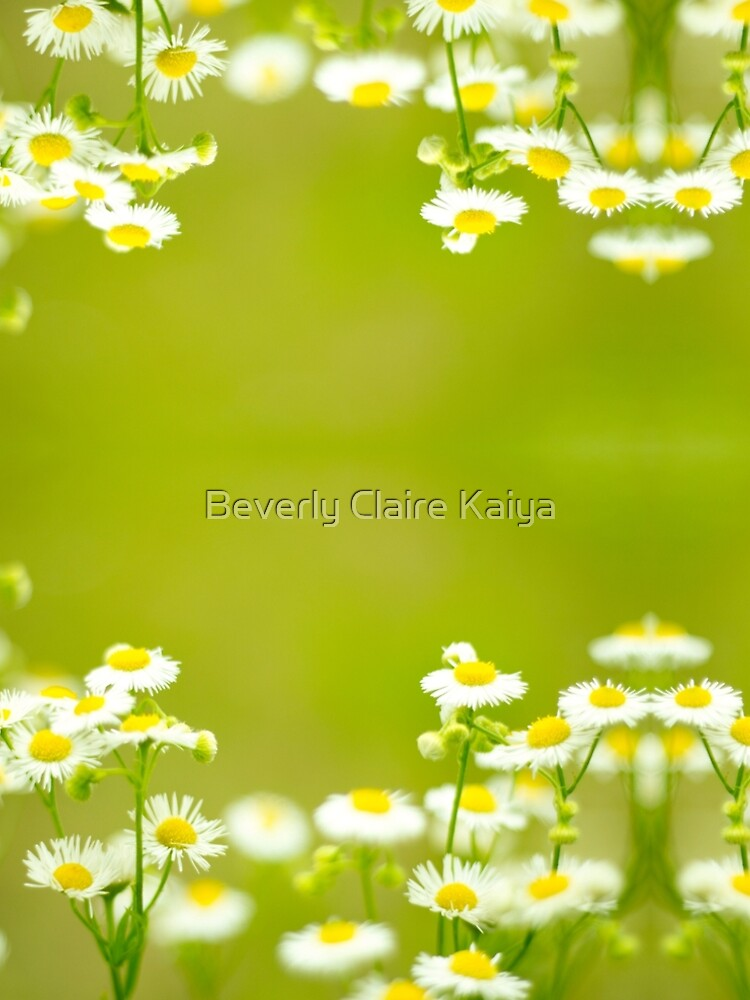 Philadelphia Fleabane Wildflowers in Soft Focus by beverlyclaire