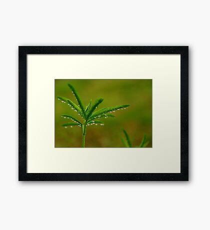 Refreshing Light Rain Framed Print
