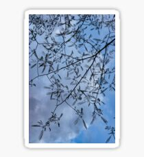 Graceful Lace in the Sky - Mimosa Leaves and Buds Against Dusk Clouds - Vertical View Downwards Right Sticker