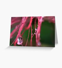 Droplet on Bottlebrush Greeting Card