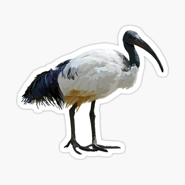 Neutral Ibis  Sticker