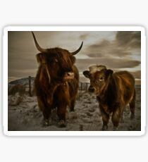 Highland Cows Sticker