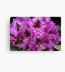 Rhododendron 'Purple Splendour' Flowerhead Close-up Canvas Print