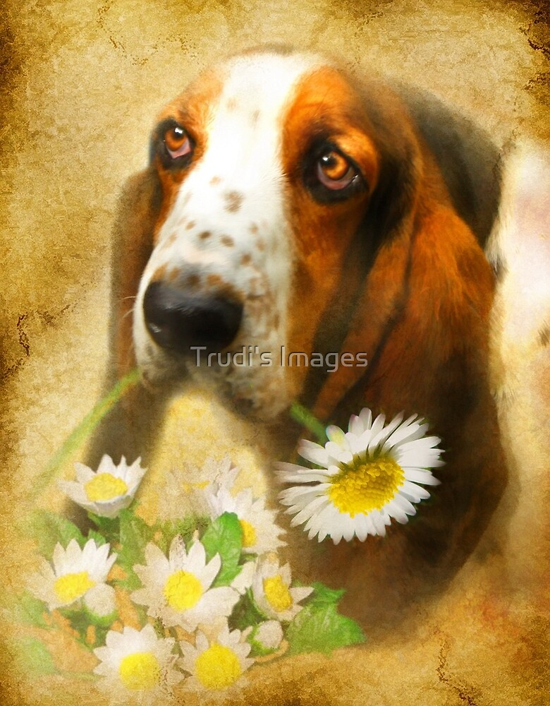 For You .... by Trudi's Images