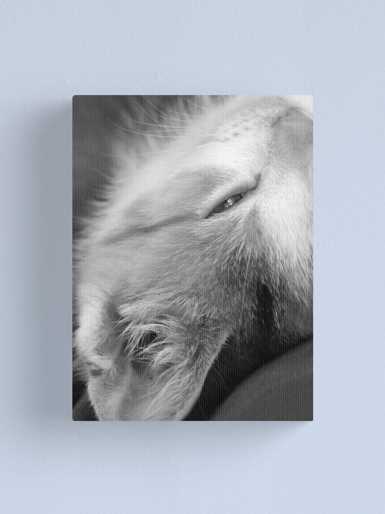 Alternate view of Cheeky Canvas Print