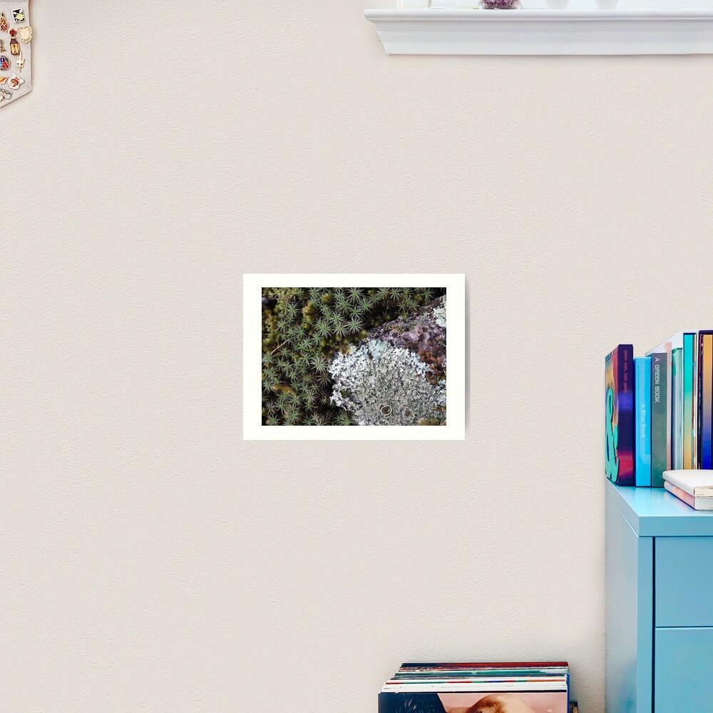 Lichen & Moss Art Print