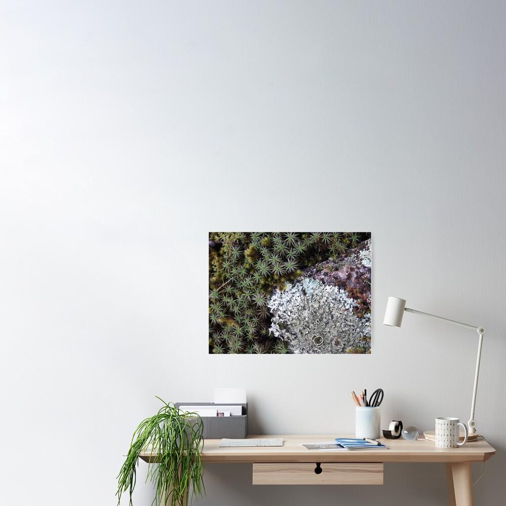 Lichen & Moss Poster