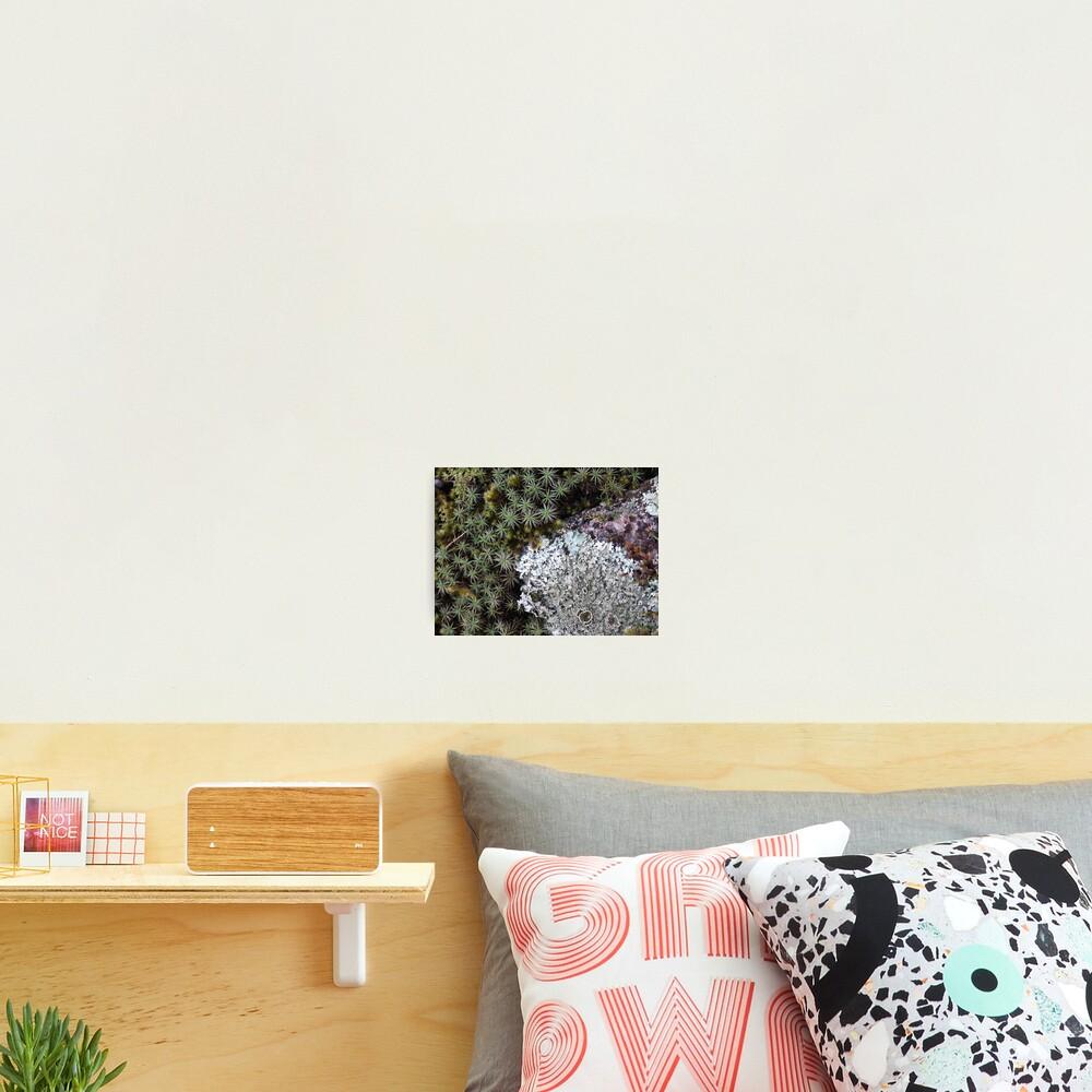Lichen & Moss Photographic Print