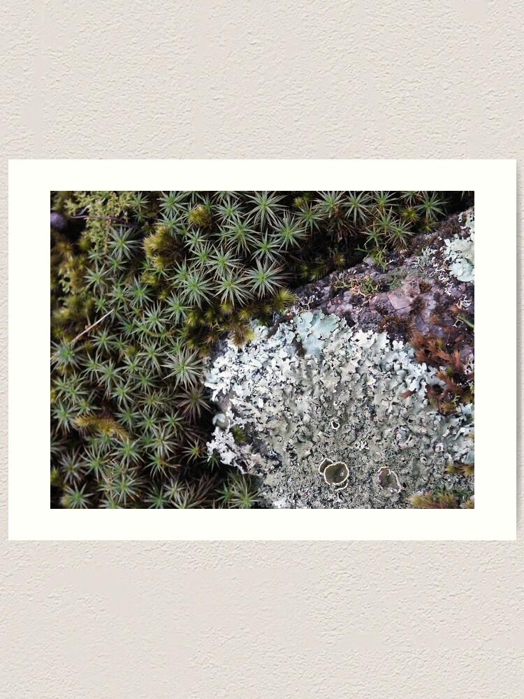 Alternate view of Lichen & Moss Art Print