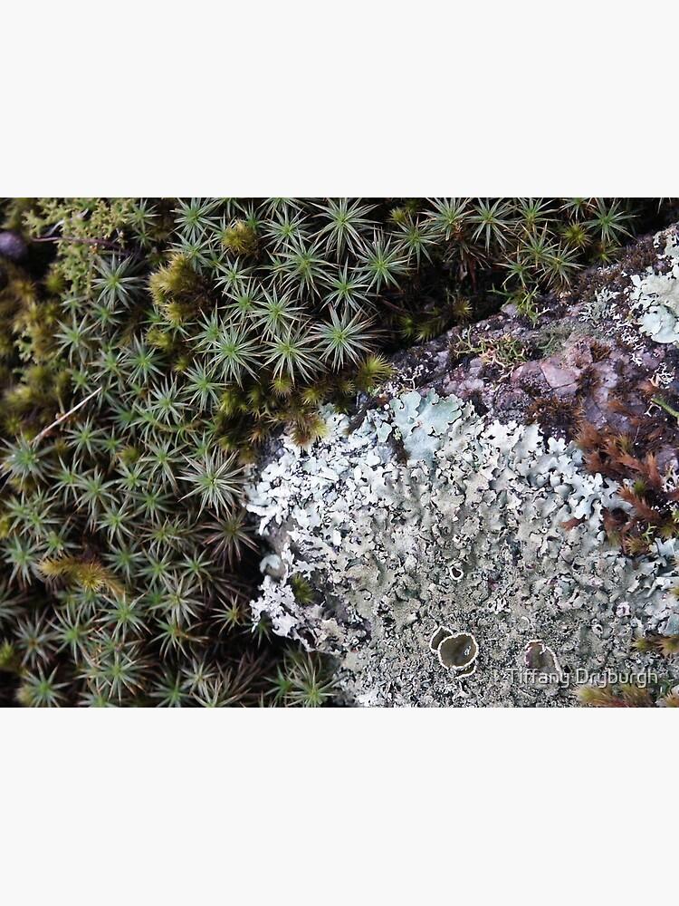 Lichen & Moss by Tiffany