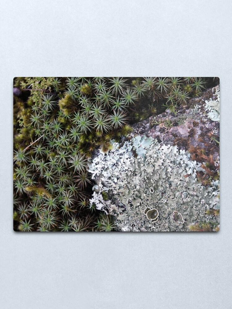 Alternate view of Lichen & Moss Metal Print