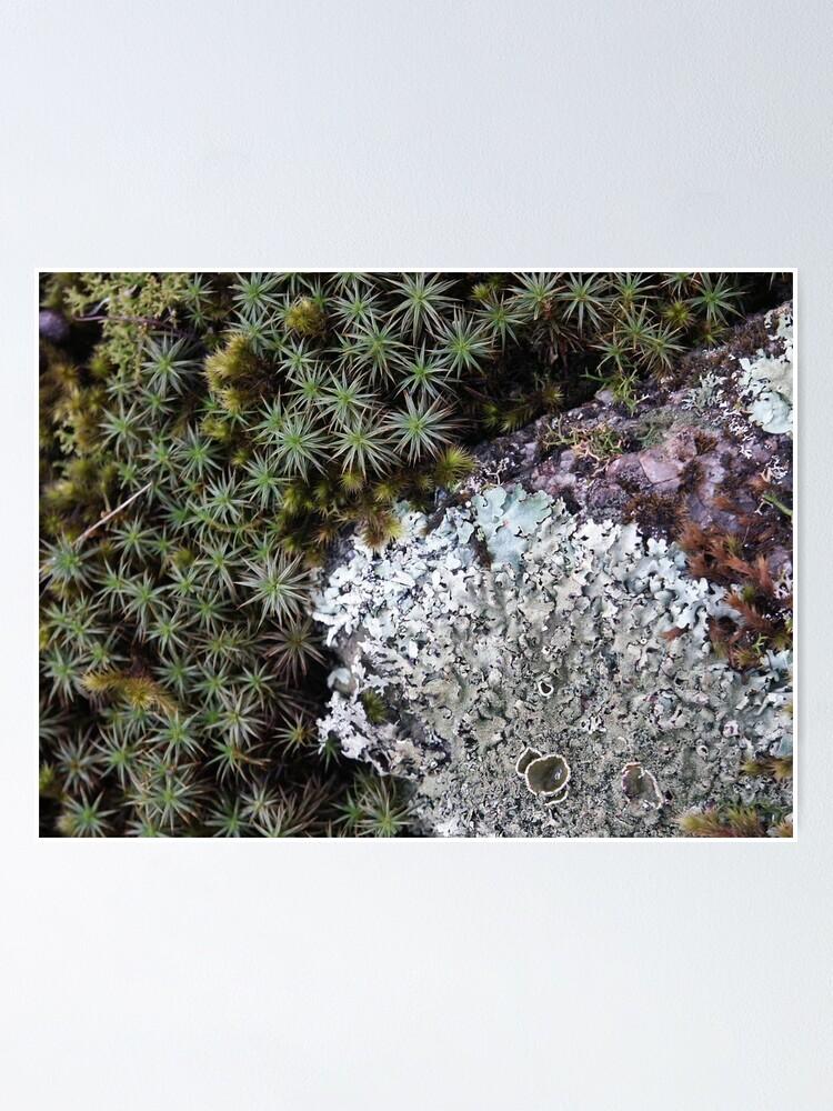 Alternate view of Lichen & Moss Poster